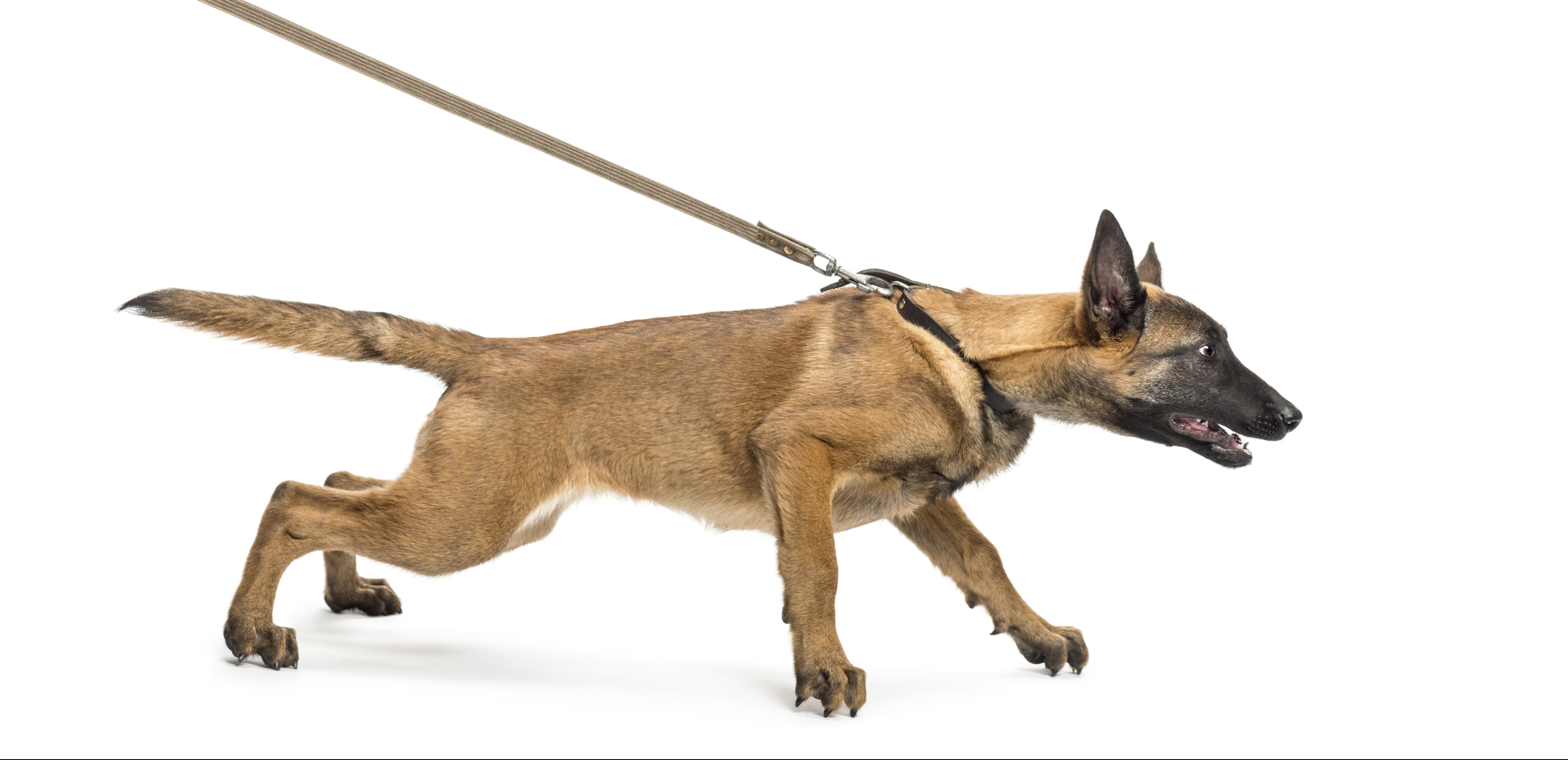 Dog Training Classes Northern Ireland