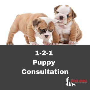 121 Puppy Consultations