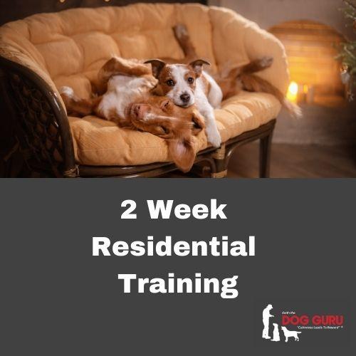 2 Week Residential Dog Training