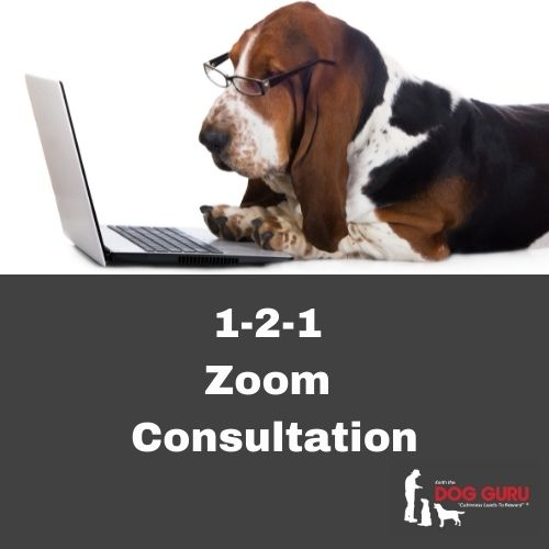 Zoom Consultations Keith The Dog Guru